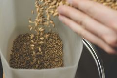 Falling malt into a homemade mill for further grinding. Craft be royalty free stock photo