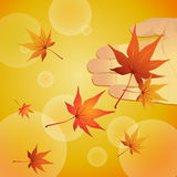 Falling maple leaf Stock Photography
