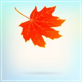 Falling maple leaf on abstract white background Stock Photos