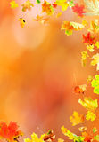 Falling Maple Leaves. Falling leaves against the autumn background Royalty Free Stock Images
