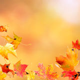 Falling Maple Leaves. Falling leaves against the autumn background stock photo