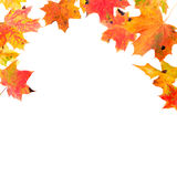Falling Maple Leaves. Falling autumn maple leaves isolated on white Royalty Free Stock Images