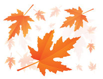 Falling maple leaves Stock Photos