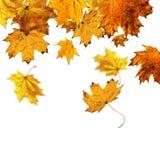 Falling maple leaves vector illustration