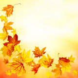 Falling maple leaves background Stock Photography