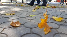 Falling maple leaves on city street. Natural fall leaves with urban background. Fall season in big city. Autumn backdrop with orange and yellow fallen leaves stock images
