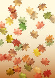 Falling maple leaves made in illustrator cs4 Royalty Free Stock Images