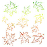 Falling maple leaves. Vector illustration with gradient outlines. Royalty Free Stock Photos