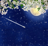 Falling meteor. Blooming cherry. Full moon. Night charm. Spring. Stock Images