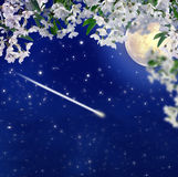 Falling meteor. Blooming cherry. Full moon. Romance and mysticis Royalty Free Stock Photo