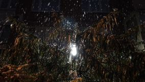 Falling mix of rain and snow on a Bush with leaves stock footage