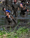 Falling in the mud. A woman falls in the mud as she tries to  wade through a muddy river in the 2013 marathon called a Mudathlon, in north west Indiana Stock Photo