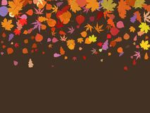 Falling multicolor autumn leaves. EPS 8 Royalty Free Stock Photography