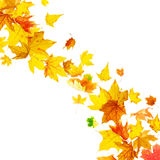 Falling multicolored autumn leaves Royalty Free Stock Image