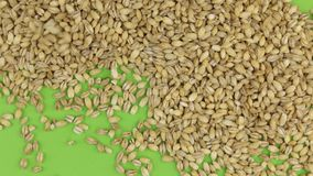 Falling pearl barley grains on a rotating green screen, isolated. stock video footage