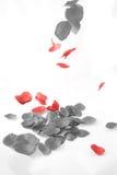 Falling Petal Stock Images