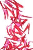 Falling petals of dahlia Royalty Free Stock Photos