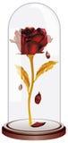 Falling Petals Red Rose Stock Photos