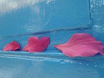 Falling pink flower pedal on blue wooden window Stock Photos