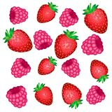 The falling of the red berries of strawberry and raspberry pink vector illustration