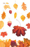 Falling red and yellow leaves isolated. Autumn season - falling red and yellow leaves isolated on white background stock photos