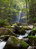 Falling river in forest Royalty Free Stock Photos