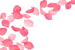 Falling rose petals bright pink blossom. Sakura cherry flying flowers. 3d realistic design. Vector illustration Royalty Free Stock Photography