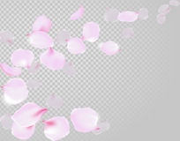 Falling Rose Petals Soft Delicate Pink Blossom On Transparent Background. Sakura Cherry Flying Flowers. 3d Realistic Design. Vecto Stock Photo