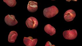 Falling Saturn Peaches on Black Background Looping 01A