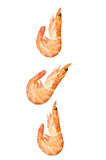 Falling Seafood Stock Photography