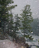 Falling snow. In forest stock photos