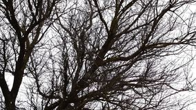 Falling snow on a background of branches of a tree. Winter has come.  stock video footage