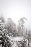 Falling snow bends two trees Royalty Free Stock Photo