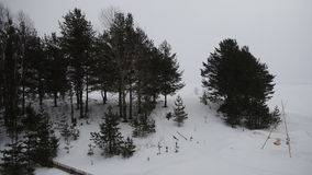 Falling snow. Flying fine snow in the winter forest stock video footage