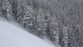 Falling snow stock video