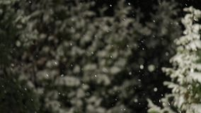 Falling snow at night stock video footage