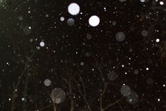 Falling snow in the night. Falling snow at night winter snow night trees Royalty Free Stock Photos
