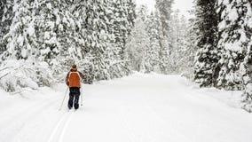 Falling snow on a ski trail in the Idaho mountains Royalty Free Stock Photos