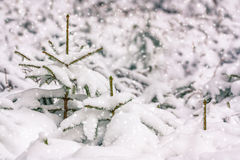 Falling snow Stock Photography