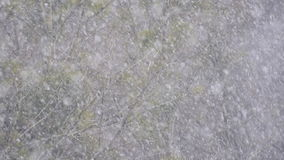 Falling snow on tree background stock footage