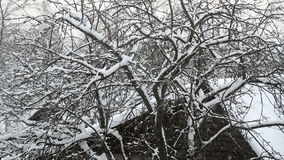 Falling snow in the village with the tree. The Apple tree stock video