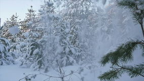 Falling snow in the winter forest Christmas. Snow winter trees. slow motion. winter background. romantic wonderland. beautiful environment. snow avalanche stock video footage