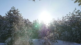 Falling snow in the winter forest Christmas. Snow winter trees. slow motion. winter background. romantic wonderland. beautiful environment. snow avalanche stock footage