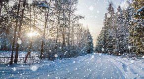 Falling snow in the winter forest, CINEMAGRAPH, loop, 4k. 4k , loop, Falling snow in the winter forest, CINEMAGRAPH stock video footage
