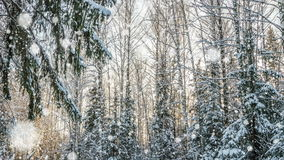 Falling snow in the winter forest, CINEMAGRAPH, loop, 1080p. 4k , loop, Falling snow in the winter forest, CINEMAGRAPH stock video