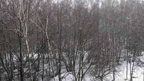 Falling snow in the winter forest. 1080p stock video