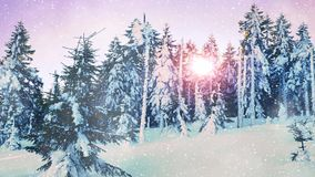 Falling snow in a winter forest with snow covered trees. Cold red sun between trees. Falling snow in a winter forest with snow covered trees. Cold red sun stock footage