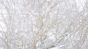 Falling snow in a winter garden. Falling snow in a winter garden with snow covered trees stock video