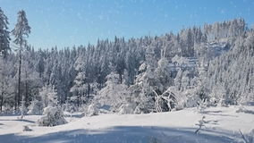Falling snow in a winter park. With snow covered trees stock video footage