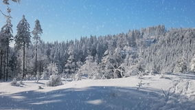 Falling snow in a winter park. With snow covered trees stock footage